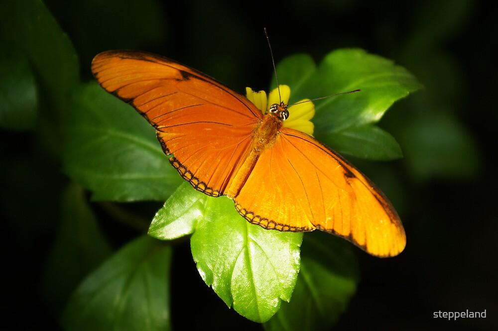 A range of Orange by steppeland