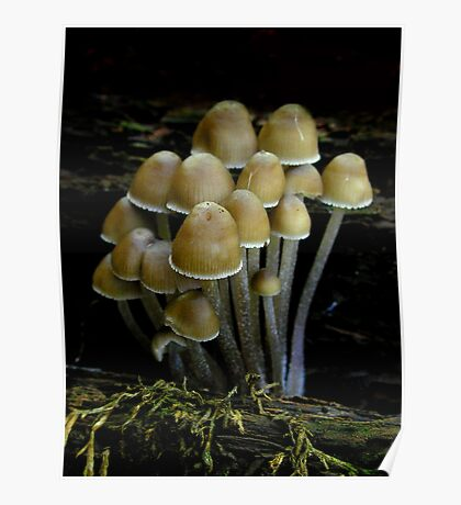 Young Brown Mycena Poster