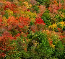 A Rainbow of Trees by Jcook