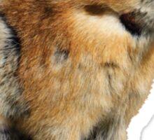 Pika Howling Sticker