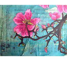 Magnolia XIII Photographic Print