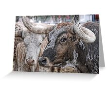 Longhorn Stare Greeting Card
