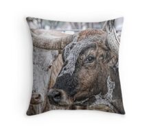 Longhorn Stare Throw Pillow