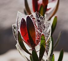 Webbed leaves by jeanlphotos