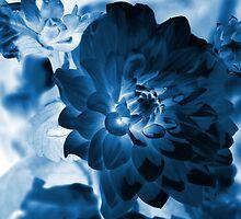 Dark Blue Dahlia by Kathleen Struckle