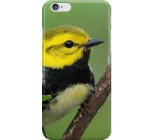 Black-throated Green Warbler iPhone Case/Skin