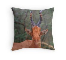 Why the Long Face? - Hartebeest Throw Pillow