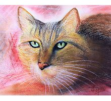 Green Eyes- Pastel painting Photographic Print