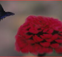 Blur and Butterfly by Judi Taylor
