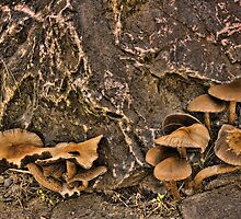 Wet Mushrooms by lincolngraham