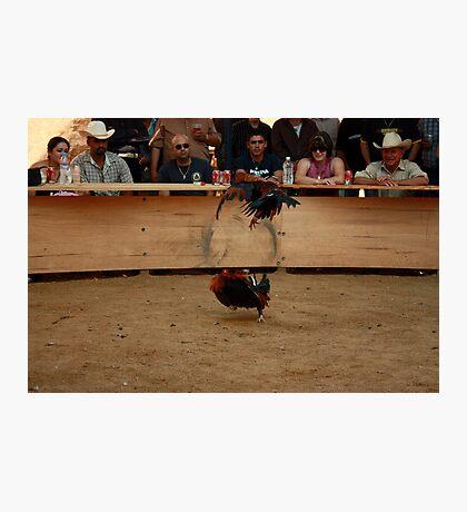 Cock Fight Photographic Print