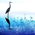 bird reflection by lensbaby