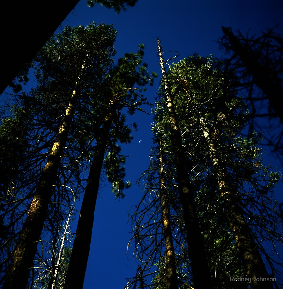 Near Laurel Lake in Yosemite N.P. by Rodney Johnson
