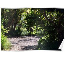 Dry Creek Bed Series No.2 Poster