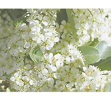Bitty Bunches Photographic Print