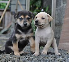 My cute Puppies by Jinny Chataroo