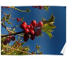 Holly Berries at Kubota Gardens Poster