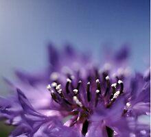 Cornflower by Bloomin' Arty Fashion