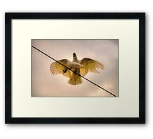 Won't You Be My Girl ? - Cockatoo, Northern Beaches Sydney - The HDR Experience Framed Print
