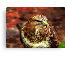 Buzzard (Buteo Buteo) - Bird of Prey Canvas Print