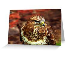 Buzzard (Buteo Buteo) - Bird of Prey Greeting Card