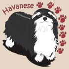 Havanese by Diana-Lee Saville