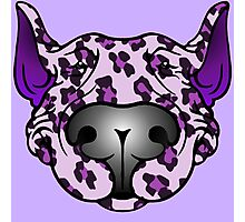 Bull Terrier Leopard Pink and Purple Photographic Print