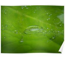 Water Drop 1 Poster