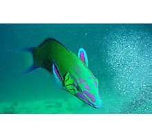 the humorous artisans parrotfish Photographic Print
