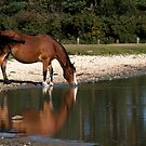 Horse in the New forest, Hampshire by Elaine123
