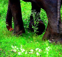 Every day is Earth Day. by Ritu Lahiri