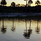 Sunrise Over Palm Trees by AWardPhotograph