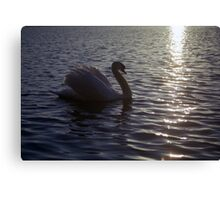 Swan on Llanfairfechan Pond Canvas Print