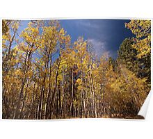 Colorado Colors Poster