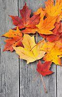 Autumn Beauty by lamiel