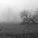 Field in the Fog by Richard Murch