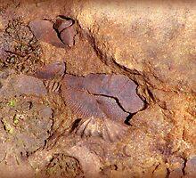 An Archeological Find by vigor