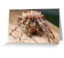 Garden Spider Macro 1 Greeting Card