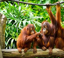 APE BABES IN THE WOODS by SHOPCOMPASSION