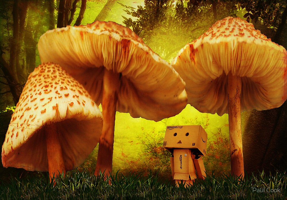 Danbo In Wonderland by Paul Cook