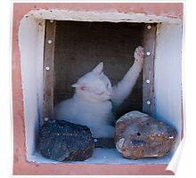Aegean Cat Poster