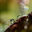 Rainy Days by Sharon Johnstone