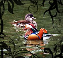 A pair of mandarin ducks by almaalice