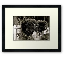 Topiary trees  Framed Print
