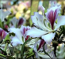 Stealing Magnolias by Maureen Grobler