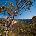 Grose Valley, Blue Mountains National Park, Australia by Erik Schlogl