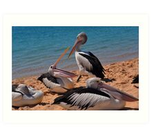 Pelicans of Monkey Mia Art Print