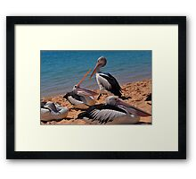 Pelicans of Monkey Mia Framed Print