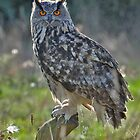 The Eagle Owl by barnowlcentre