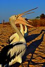 Pelican Talk by Miles Moody